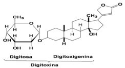 glicosideoss-1
